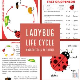 #freehomeschooldeals #fhdhomeschoolers #ladybuglifecycle #ladybugprintables