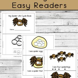 FREE Easy Reader Spider Life Cycle. #freehomeschooldeals #fhdhomeschoolers #spiderlifecycle #spidereasyreaders