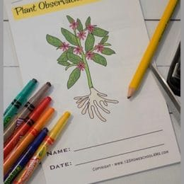 Plant Life Cycle Worksheets. #freeunitstudy #plantlifecyleunitstudy #freenatureunitstudy #freehomeschooldeals #fhdhomeschoolers