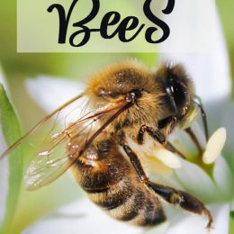 Free Learning Resources About Bees. #beesunitstudy #beelifecyclepack #beesforkids #freehomeschooldeals #fhdhomeschoolers