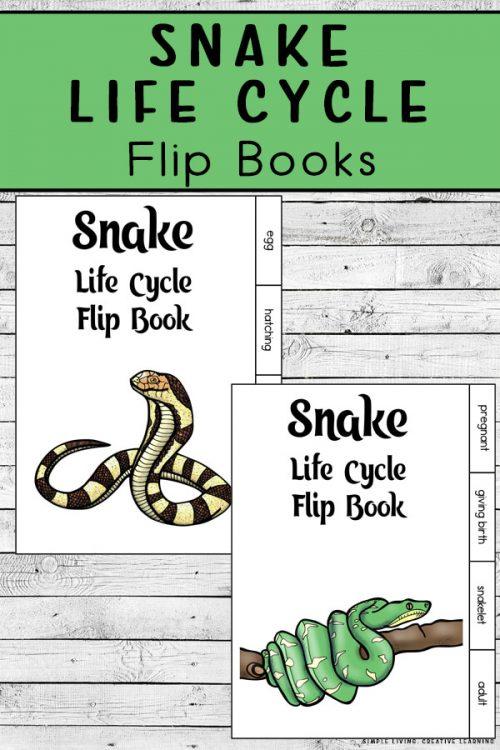FREE Snake Life Cycle Flip Books. #freehomeschooldeals #fhdhomeschoolers #snakelifecycle #lifecycleofsnakes #snakeprintables #snakescience