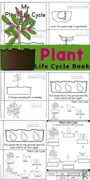 FREE Plant Life Cycle Worksheets. #freehomeschooldeals #fhdhomeschoolers #plantifecycles #plantlifecycleworksheets #lifecycleworksheets