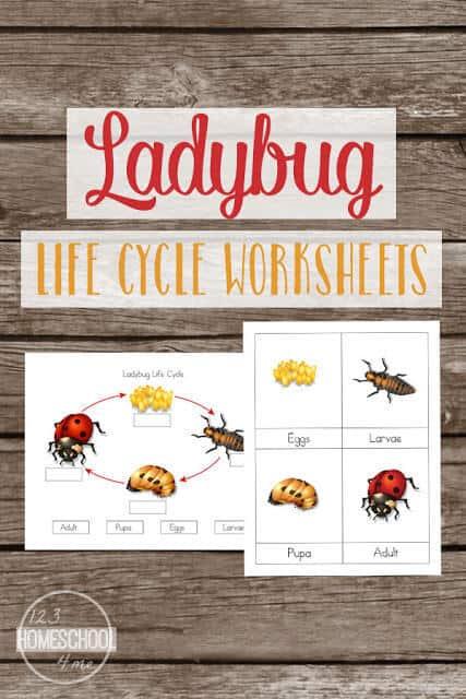 Free Ladybug Lifecycle Worksheets. #freehomeschooldeals #fhdhomeschoolers #ladybugliecycleworksheets #ladybugworksheets #lifecycleworksheets
