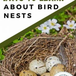 Free Learning Resources About Bird Nests. #freehomeschooldeals #fhdhomeschoolers #studyingbirds #learningaboutbirdnests #naturestudy
