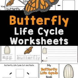 Butterfly Life Cycle Printables. #freehomeschooldeals #fhdhomeschoolers #freebutterflylifecyclestudy #butterflyunitstudy #freebutterflyworksheets