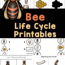 Honey Bee Life Cycle Pack. #freehomeschooldeals #fhdhomeschoolers #beelifecyclepack #studyingbees #beeworksheets