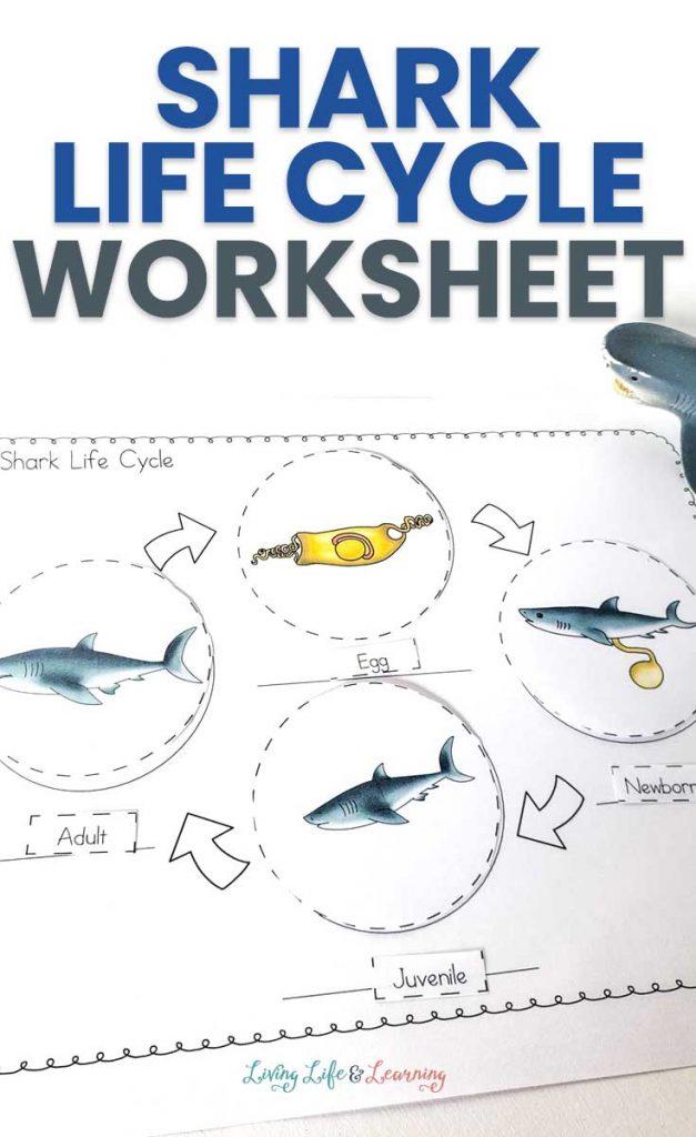 Shark Life Cycle Activity. #freehomeschooldeals #fhdhomeschoolers #studyingsharks #sharklifecycleworksheets #freesharkworksheets