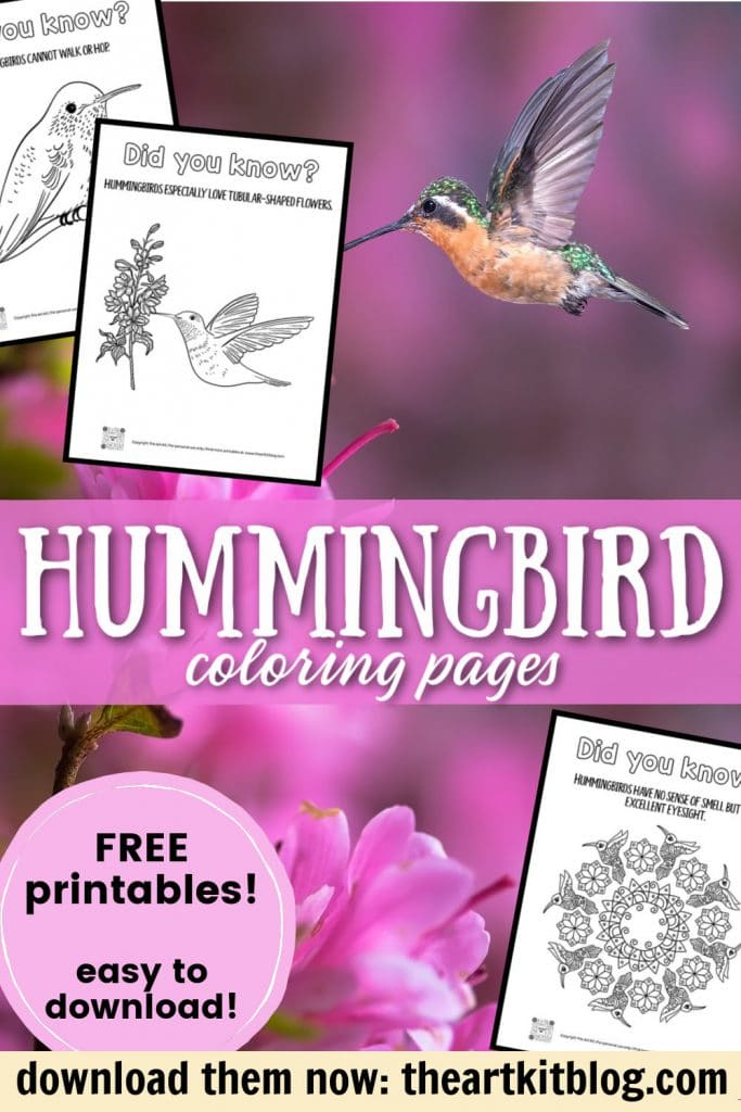 Hummingbird Color and Learn Pages. #freehomeschooldeals #fhdhomeschoolers #studyinghummingbirds #hummingbirdcoloringpages #freehummingbirdcoloringpages