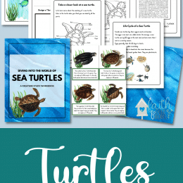 Sea Turtles Study Workbook, printables images, and sea turtles text overlay. #freehomeschooldeals #fhdhomeschoolers #studyingseaturtles #seaturtlesunitstudy #seaturtleworksheets