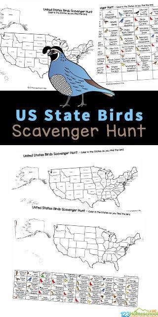 State Bird Learning Activity. #freehomeschooldeals #fhdhomeschoolers #learningaboutstatebirds #statebirdscavengerhunt #statebirdactivity